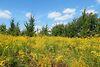 Земля під житлову забудову в селі Стрижавка, площа 12.5 соток фото 2