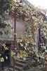 двухкомнатная дача с цокольным этажом, 50 кв. м, кирпич. Продажа в Чопе, в районе Чоп фото 2