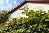 трехкомнатная дача, 46 кв. м, кирпич. Продажа в Прошовой (Тернопольская обл.) фото 4