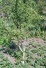 двухкомнатная дача, 36 кв. м, кирпич. Продажа в Ступках (Тернопольская обл.) фото 6