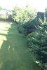одноэтажный дом, 100 кв. м, дерево и кирпич. Продажа в Киенке (Черниговская обл.) фото 2