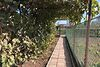 двоповерховий будинок з садом, 119 кв. м, ракушняк. Продаж в Олександрівці (Одеська обл.) фото 7