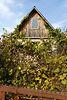 одноэтажный дом, 32 кв. м, дерево и кирпич. Продажа в Буках (Житомирская обл.) фото 3