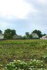 одноэтажный дом с садом, 90 кв. м, кирпич. Продажа в Кагарлыке район Кагарлык фото 5