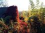 одноповерховий будинок з підвалом, 90 кв. м, кирпич. Продаж в Красилові, район Красилів фото 3