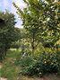 одноэтажный дом с гаражом, 110 кв. м, кирпич. Продажа в Люботине район Люботин фото 8
