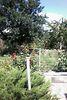 двухэтажный дом с садом, 501 кв. м, ракушечник (ракушняк). Продажа в Царском Селе 2 (Одесская обл.) фото 5