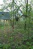 одноэтажный дом с садом, 40 кв. м, кирпич. Продажа в Ворочово (Закарпатская обл.) фото 3