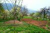 одноэтажный дом с садом, 40 кв. м, кирпич. Продажа в Ворочово (Закарпатская обл.) фото 4