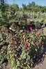 одноэтажный дом с садом, 62 кв. м, сруб. Продажа в Хотине (Сумская обл.) фото 1