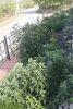 одноэтажный дом с садом, 68 кв. м, кирпич. Продажа в Билоскирке (Тернопольская обл.) фото 5