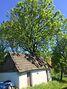 одноэтажный дом, 42 кв. м, кирпич. Продажа в Настасове (Тернопольская обл.) фото 7