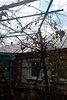 одноповерховий будинок з садом, 80 кв. м, цегла. Продаж в Тростянці, район Тростянець фото 5