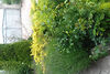 одноэтажный дом, 160 кв. м, кирпич. Продажа в Доманинцах (Закарпатская обл.) фото 7