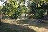 одноэтажный дом с садом, 130 кв. м, кирпич. Продажа в Невицком (Закарпатская обл.) фото 8