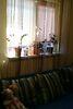одноэтажный дом, 51 кв. м, кирпич саманный. Продажа в Ужгороде район Радванка фото 5