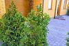 двухэтажный дом, 135 кв. м, кирпич. Продажа в Виннице район Гниванское шоссе фото 5
