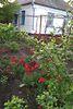 одноэтажный дом с садом, 70.5 кв. м, кирпич. Продажа в Березне (Киевская обл.) фото 2