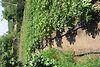 одноэтажный дом с садом, 100 кв. м, кирпич. Продажа в Александровке (Николаевская обл.) фото 4