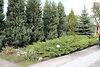 двухэтажный дом с камином, 90 кв. м, кирпич. Продажа в Вольнянске (Запорожская обл.) фото 8