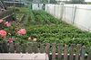 одноэтажный дом с садом, 100 кв. м, кирпич силикатный. Продажа в Запорожье район Запорожье Левое фото 6