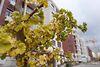 Продажа трехкомнатной квартиры в Одессе, район Совиньон фото 2
