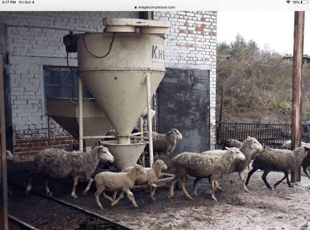 Производственное помещение в Чернигове, продажа по Кошовка, район Масаны, цена: договорная за объект фото 1