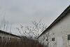 Складское помещение в Виннице, продажа по, в селе Вороновица, цена: договорная за объект фото 5