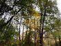 Земля под жилую застройку в селе Гнедин, площадь 25 соток фото 1