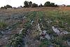 Земля под жилую застройку в селе Иванков, площадь 41 сотка фото 1