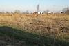 Земля под жилую застройку в Борисполе, район Петровское, площадь 10 соток фото 5