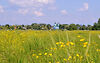 Земля под жилую застройку в селе Рогозов, площадь 8 соток фото 7