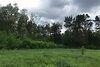 Земля под жилую застройку в селе Счастливое, площадь 60 соток фото 4