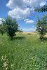 Земля под жилую застройку в селе Микуличи, площадь 22 сотки фото 7