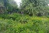 Земля под жилую застройку в Буче, район Буча, площадь 10.7 сотки фото 6