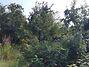 Земля под жилую застройку в Буче, район Буча, площадь 12 соток фото 4