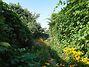 Земля под жилую застройку в Буче, район Буча, площадь 12 соток фото 7