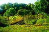 Земля под жилую застройку в Чернигове, район Лесковица, площадь 11 соток фото 2