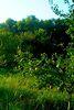 Земля под жилую застройку в Чернигове, район Лесковица, площадь 11 соток фото 3