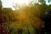 Земля под жилую застройку в Чернигове, район Лесковица, площадь 11 соток фото 4