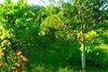 Земля под жилую застройку в Чернигове, район Лесковица, площадь 11 соток фото 6