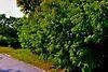 Земля под жилую застройку в селе Редьковка, площадь 12 соток фото 2