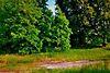 Земля под жилую застройку в селе Редьковка, площадь 12 соток фото 7