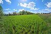 Земля под жилую застройку в селе Старый Белоус, площадь 10.8 сотки фото 6
