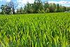 Земля под жилую застройку в селе Старый Белоус, площадь 10.8 сотки фото 8