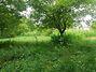 Земля под жилую застройку в Черновцах, район Роша, площадь 5 соток фото 3
