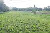 Земля под жилую застройку в селе Великий Кучеров, площадь 45 соток фото 3