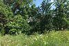 Земля під житлову забудову в селі Волоське, площа 16 соток фото 8
