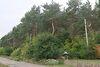 Земля под жилую застройку в селе Орловщина, площадь 54 сотки фото 3