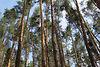 Земля под жилую застройку в селе Васищево, площадь 10 соток фото 2